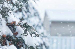 winter-activities-in-westfield-nj